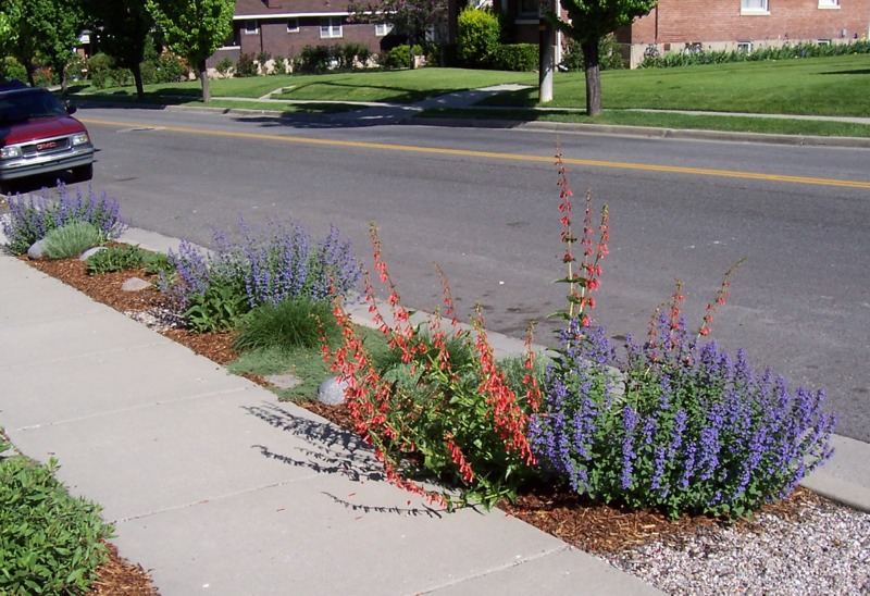 Xeriscape Design And Landscaping Parking Strips